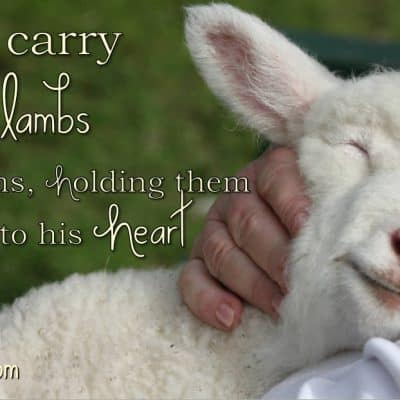 A Little Loved Lamb